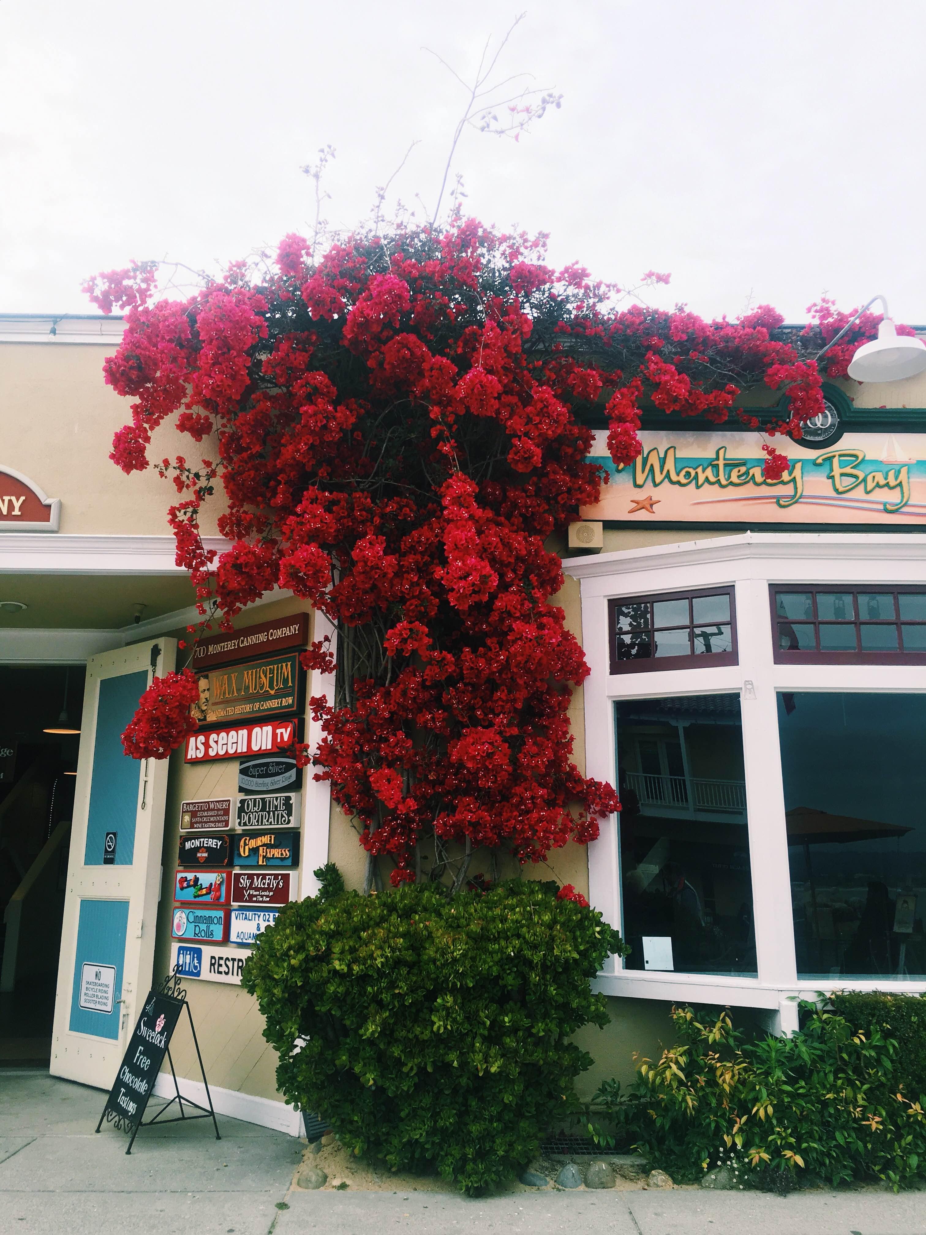 #GrabYourMoment Monterey - 4
